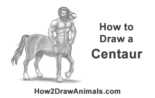 How to Draw a Centaur Horse Human Mythology