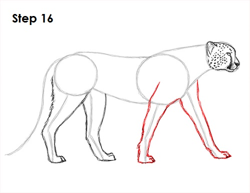 Draw Cheetah 16