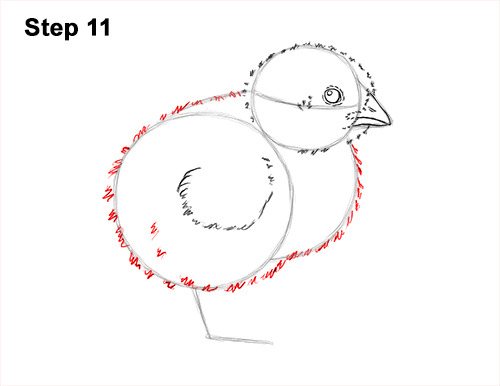 How to Draw Cute Baby Chick Chicken Hen 11