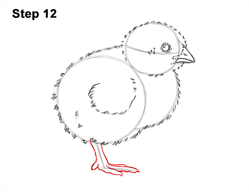 How to Draw Cute Baby Chick Chicken Hen 12