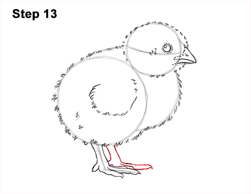 How to Draw Cute Baby Chick Chicken Hen 13