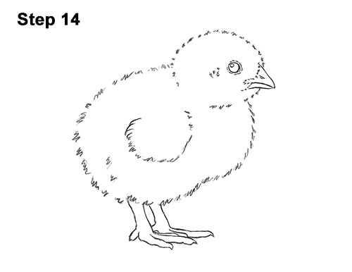 How to Draw Cute Baby Chick Chicken Hen 14