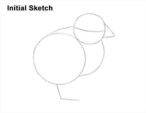 How to Draw Cute Baby Chick Chicken Hen Guide Lines