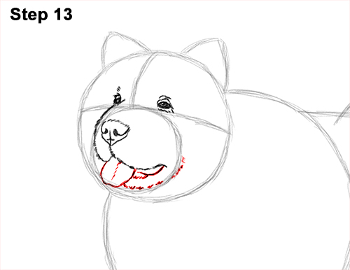 How to Draw Cute Chow Chow Puppy Dog 13