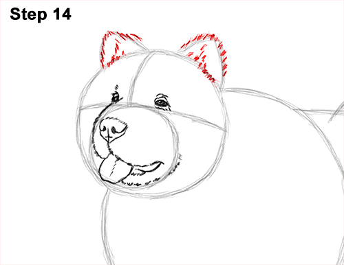 How to Draw Cute Chow Chow Puppy Dog 14
