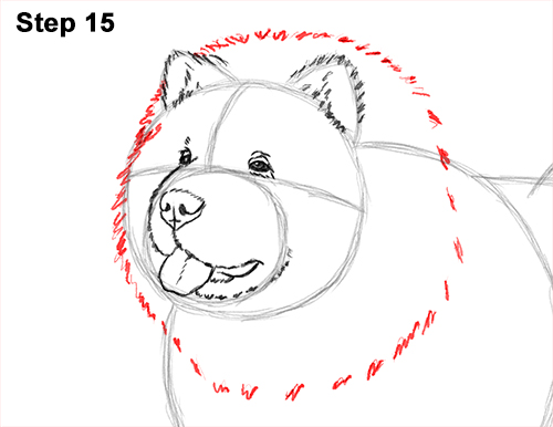 How to Draw Cute Chow Chow Puppy Dog 15