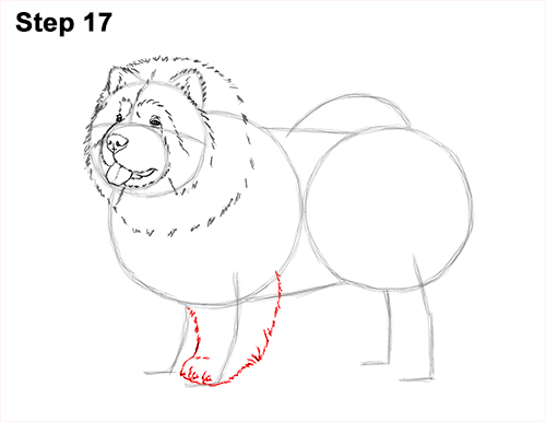 How to Draw Cute Chow Chow Puppy Dog 17