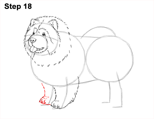 How to Draw Cute Chow Chow Puppy Dog 18