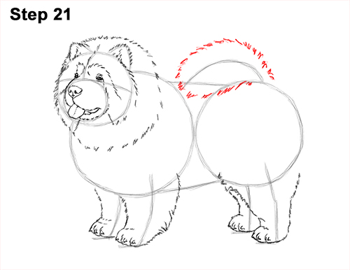 How to Draw Cute Chow Chow Puppy Dog 21