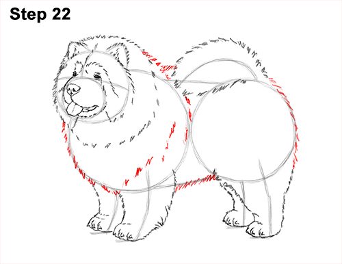 How to Draw Cute Chow Chow Puppy Dog 22