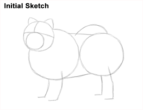 How to Draw Cute Chow Chow Puppy Dog Initial Guides