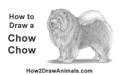 How to Draw Cute Chow Chow Puppy Dog