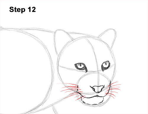 Draw Clouded Leopard 12