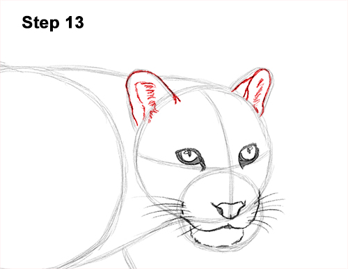 Draw Clouded Leopard 13