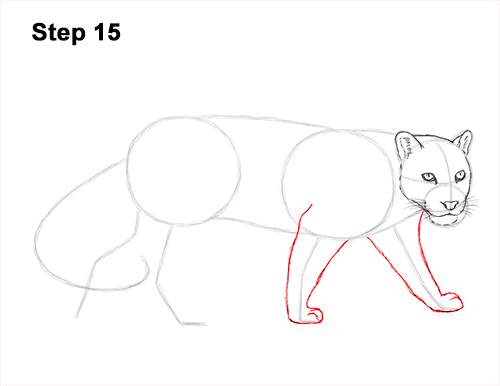 Draw Clouded Leopard 15