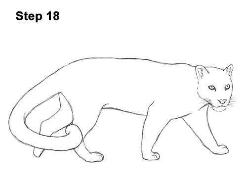 Draw Clouded Leopard 18