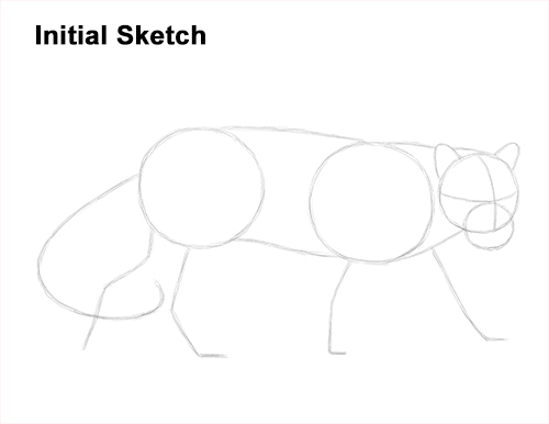 Draw Clouded Leopard Initial Sketch
