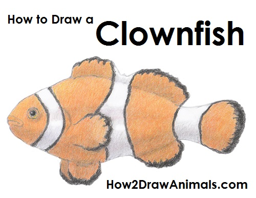 Draw Clownfish