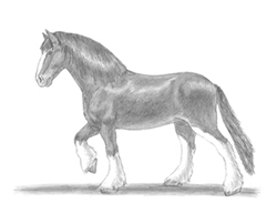 How to Draw a Clydesdale Horse
