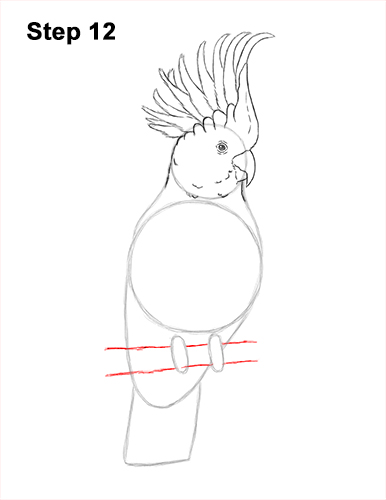 How to Draw a Sulphur Crested Cockatoo Bird Parrot 12