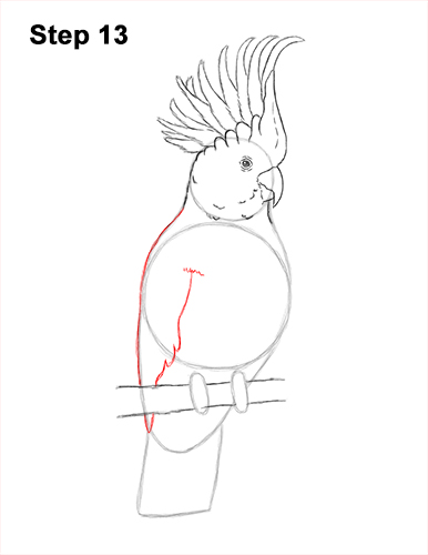 How to Draw a Sulphur Crested Cockatoo Bird Parrot 14