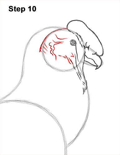 How to Draw an Andean Condor Bird Side View 10