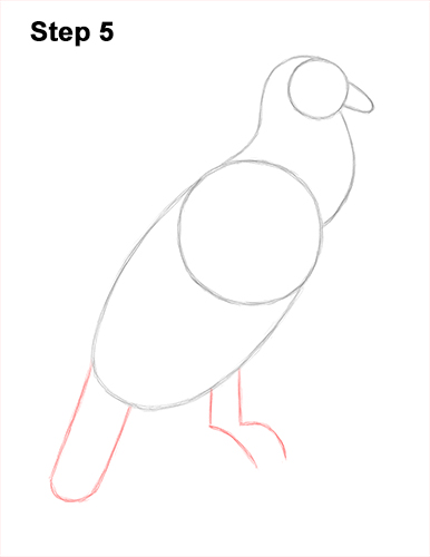 How to Draw an Andean Condor Bird Side View 5