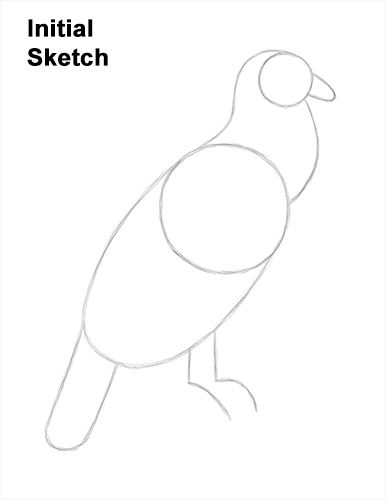 How to Draw an Andean Condor Bird Side View Guides Lines