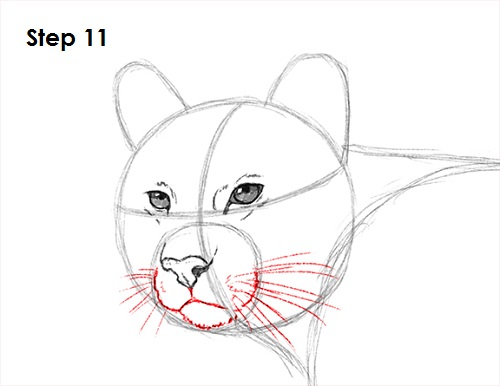 Draw Cougar Cat 11