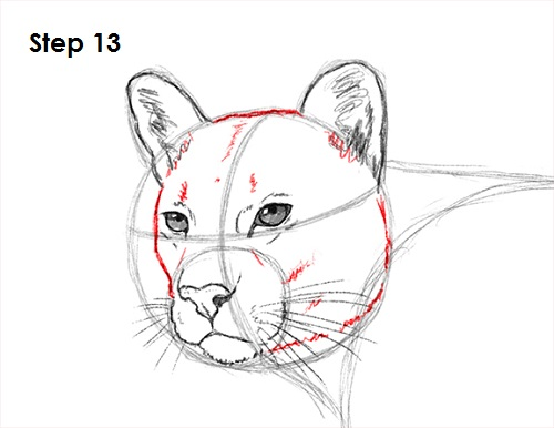 Draw Cougar Cat 13