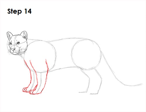 Draw Cougar Cat 14