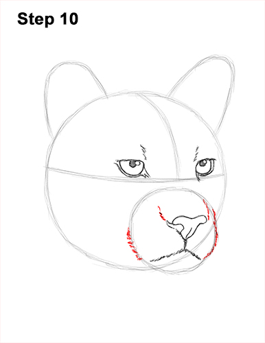 How to Draw a Cougar Mountain Lion Puma Panther Head 10