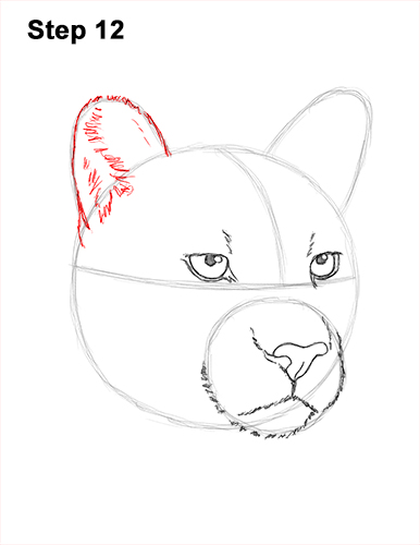 How to Draw a Cougar Mountain Lion Puma Panther Head 12