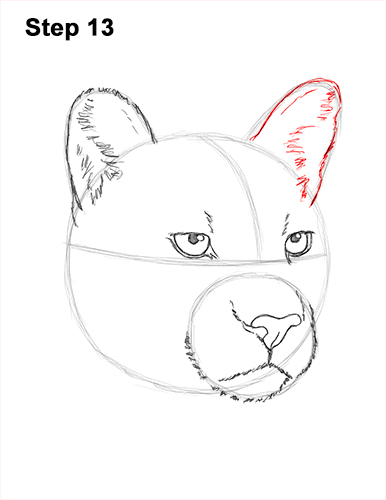 How to Draw a Cougar Mountain Lion Puma Panther Head 13