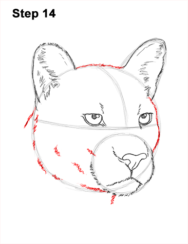 How to Draw a Cougar Mountain Lion Puma Panther Head 14