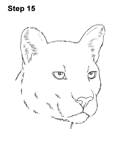 How to Draw a Cougar Mountain Lion Puma Panther Head 15