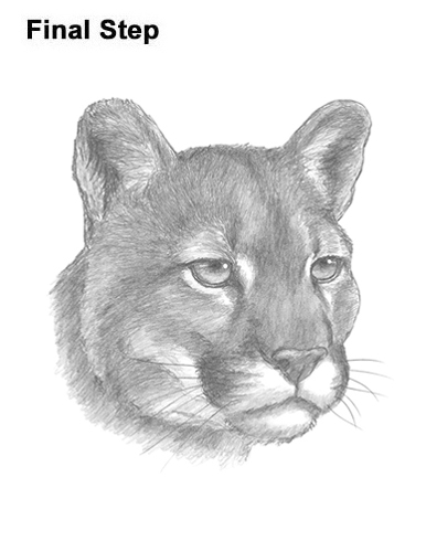 How to Draw a Cougar Mountain Lion Puma Panther Head