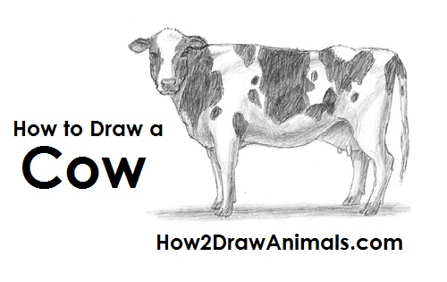 Draw Cow