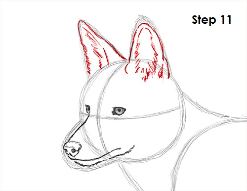 Draw Coyote 11