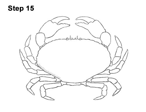 How to Draw a Brown Edible Red Crab 15