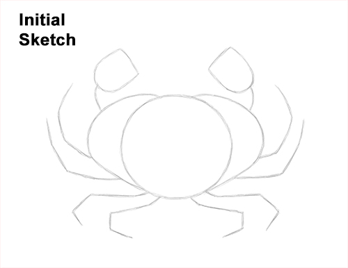 How to Draw a Brown Edible Red Crab Guides Lines