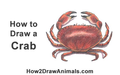 How to Draw a Brown Edible Red Crab Color