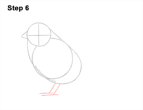 How to Draw a White-Crowned Sparrow Bird 6