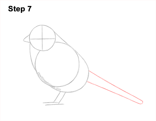How to Draw a White-Crowned Sparrow Bird 7