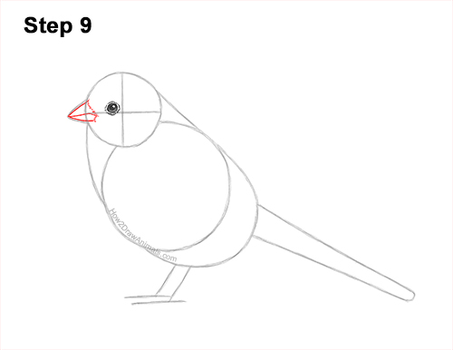 How to Draw a White-Crowned Sparrow Bird 9
