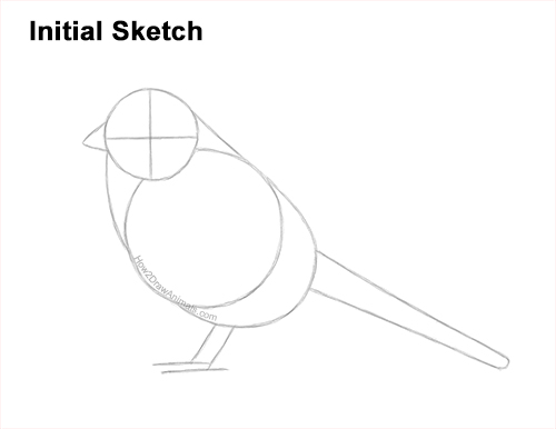 How to Draw a White-Crowned Sparrow Bird Guides Lines