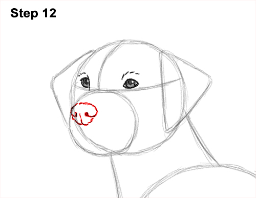 How to Draw Dalmatian Puppy 12
