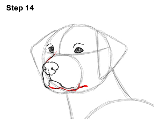 How to Draw Dalmatian Puppy 14