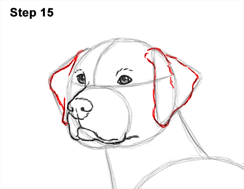 How to Draw Dalmatian Puppy 15