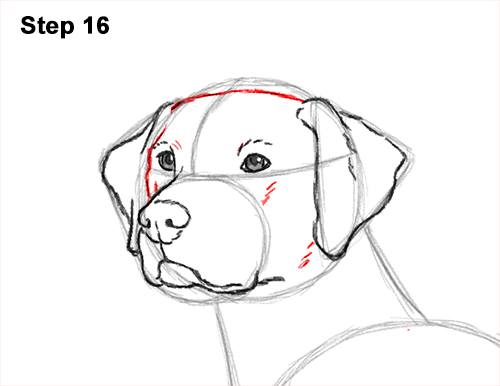 How to Draw Dalmatian Puppy 16